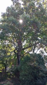 green-tree-with-sun-in-center